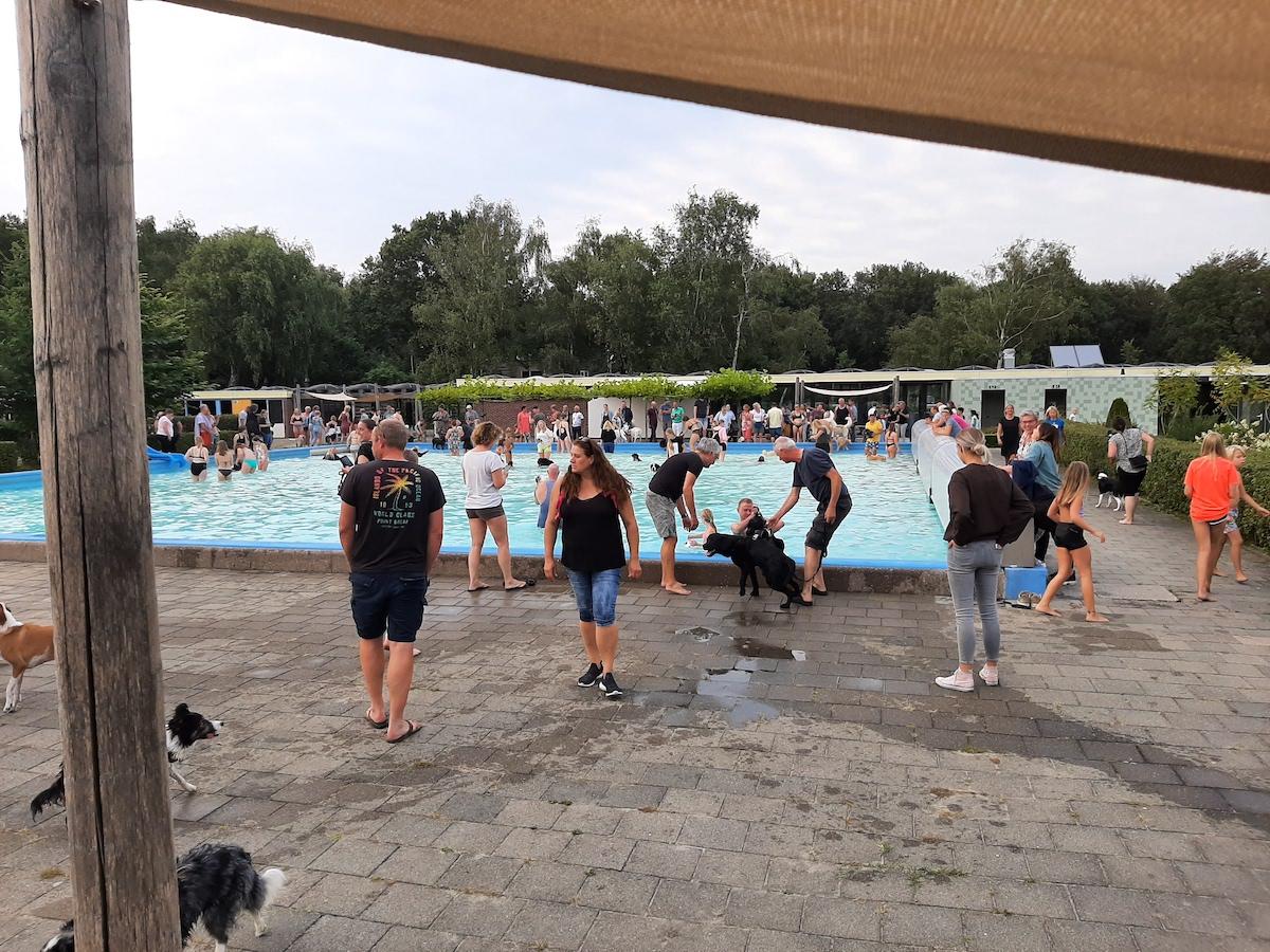 Hondenzwemmen 6-9-2021